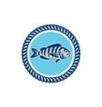 Sheepshead Fish Rope Circle Retro vector image vector image
