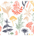 botanical background with hand drawn spices and vector image