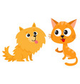 pomeranian spitz dog and red cat kitten vector image vector image