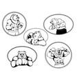 set of boxer bear logos vector image