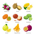 exotic fruits - icon set detailed vector image vector image
