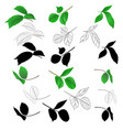 branches of roses with leaves natural outline vector image vector image