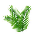 green leaves of palm tree isolated on white vector image