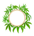 hemp plant frame on white background vector image