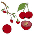 set of hand-drawn cherry uncolored vector image