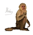 watercolor monkey on white background vector image vector image