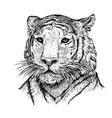 2022 year tiger 4