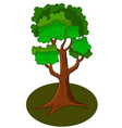 green tree cartoon vector image vector image