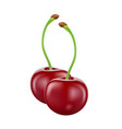 cherry isolated on white background vector image vector image