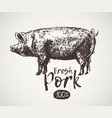 graphical pig and inscription hand drawing vector image vector image