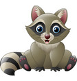 cute raccoon sitting vector image