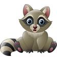 cute raccoon sitting vector image vector image