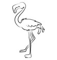 flamingo drawing on white background vector image