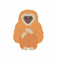 gibbon primate mammal monkey isolated on white vector image vector image