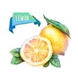 Lemon hand drawn watercolor on a white background vector image vector image