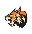 lynx wildcat logo mascot vector image vector image