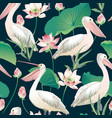seamless pattern pelican and lotus flowers vector image vector image