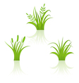 Set green grass isolated on white background vector image