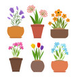 garden spring flowers in flower pots set vector image vector image