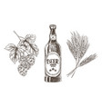 hop and wheat bunches isolated beer ingredients vector image