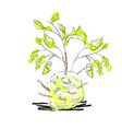 illustration of celery with root leaf vector image vector image