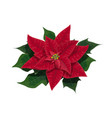 poinsettia flower of christmas holidays vector image