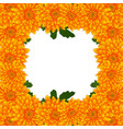 yellow mum chrysanthemum flower border vector image