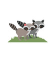 cute raccoon animal couple together vector image