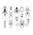 different insects with patterns on wings vector image