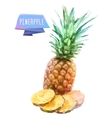Pineapple hand drawn watercolor on a white vector image vector image