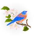 bluebird small thrush songbirdon on an apple tree vector image vector image