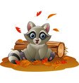 cartoon raccoon in the autumn weather vector image vector image