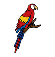 exotic parrot in branch tropical bird vector image vector image