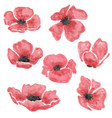 watercolor poppy flowers set isolated on white vector image