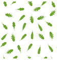 pattern with arugula vector image vector image