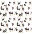 chihuahua seamless pattern vector image