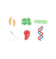 different types cells dna structure collection vector image vector image