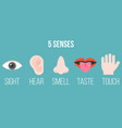 five senses icon flat design with name vector image