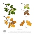 Oak branch in summer and autumn vector image vector image
