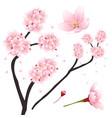 prunus serrulata - pink cherry blossom sakura vector image vector image