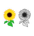 sunflower print for t-shirt color and vector image