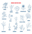 best foods for the immune system vector image