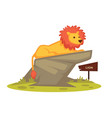 lion zoo animal and wooden signboard vector image vector image