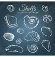 set shells on chalkboard vector image