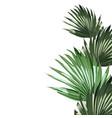 tropical palm leaves jungle leaf dark ficus plan vector image