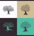 Beautiful magnificent olive tree silhouette vector image