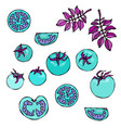 crazy blue turquoise tomatoes with pink leaves vector image