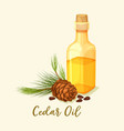 glassware bottle with cedar oil and pine cone vector image vector image