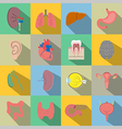Human organs flat style icons vector image vector image