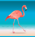 exotic pink flamingo walking on the hot summer vector image